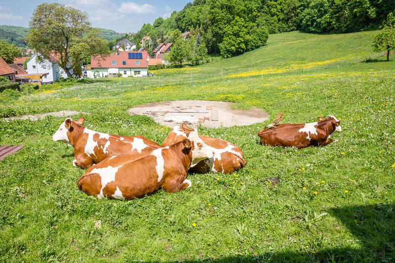 Haenfling_Bauernhof_Ferienwohnungen_Weissenohe_004